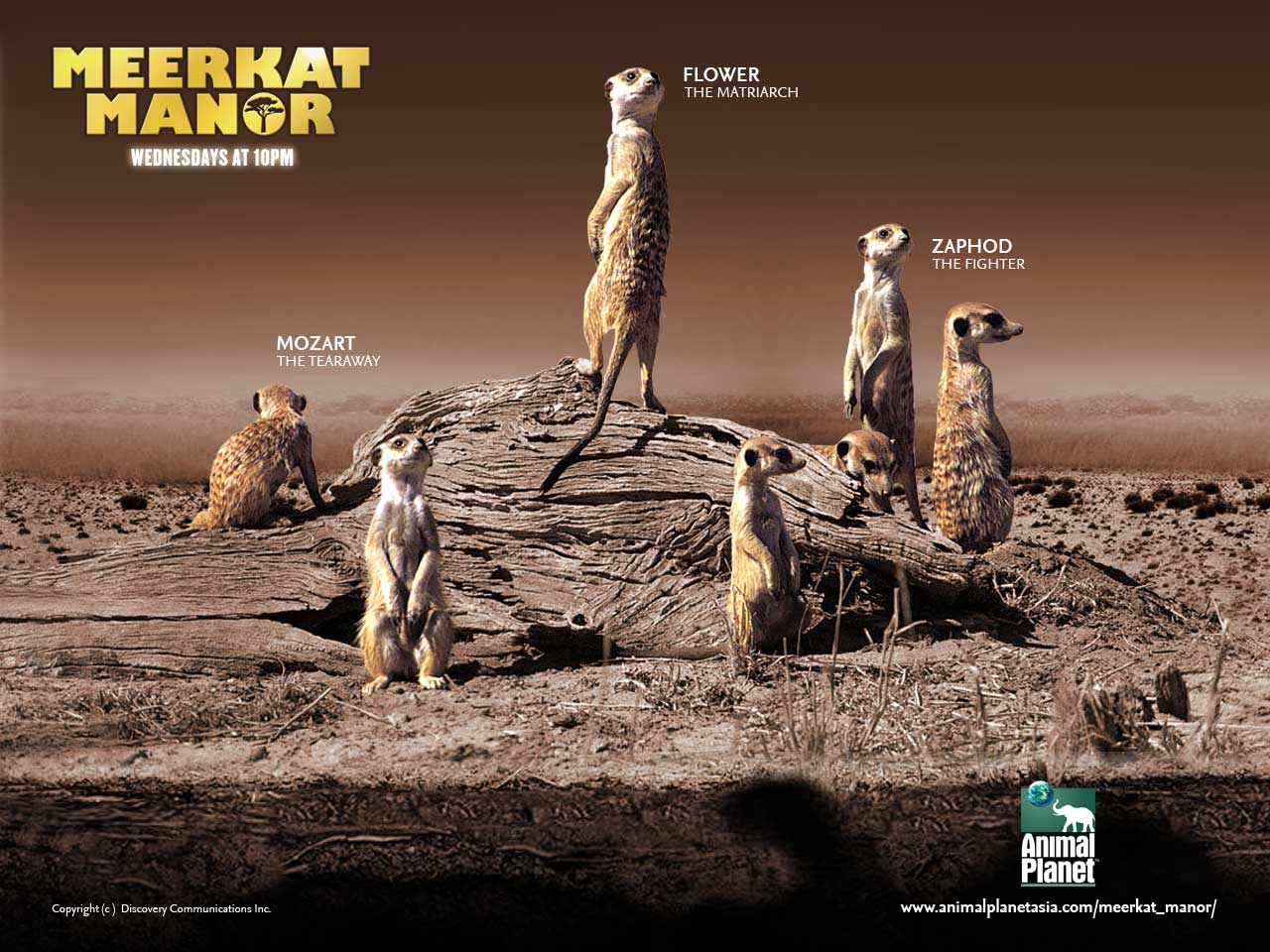 meerkat manor A nature writer suddenly finds himself at the heart of a hot plagiarism scandal.